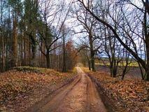在森林农村秋天风景的乡下公路 库存图片