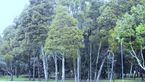 在森林冬天季节的雨 股票视频