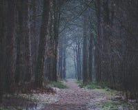 在森林前面道路黑暗的清早步行 免版税库存图片