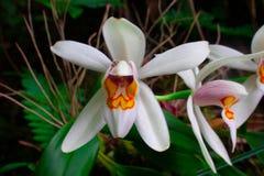 在森林厚度的深刻的下来 有白色兰花 最罕见 库存照片