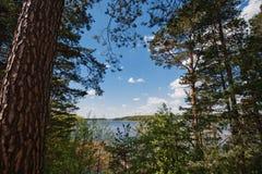 在森林后的大湖 免版税库存图片