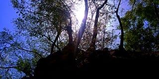 在森林后的美好的日落 免版税库存图片