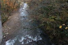 在森林和山里面的长尾巴河 库存照片