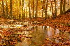 在森林和树的小河 免版税库存照片