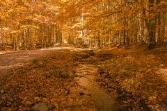 在森林和树的小河 免版税图库摄影