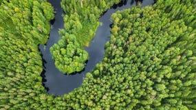 在森林和河的鸟瞰图 免版税库存照片