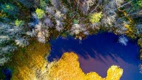 在森林和沼泽的鸟瞰图在Celestynow在波兰 库存图片