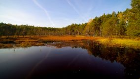 在森林和沼泽的鸟瞰图在Celestynow在波兰 库存照片