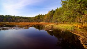 在森林和沼泽的鸟瞰图在Celestynow我波兰 免版税库存图片
