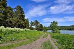 在森林和湖附近的美好的夏天风景 库存图片