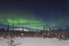 在森林和积雪的tre的美好的北极光 免版税库存照片