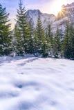 在森林和阿尔卑斯的冬天阳光 免版税库存图片