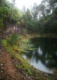 在森林在一个雨天包围的一个农场的一个水坝在罗伯逊,南非 免版税图库摄影