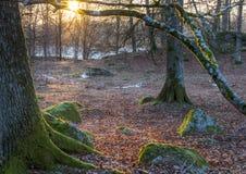 在森林地板上的光 免版税图库摄影