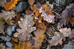 在森林地板上的叶子 库存图片