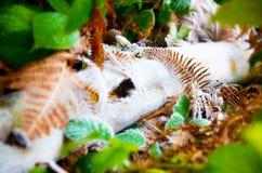 在森林地板上的困霜 免版税库存图片