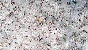 在森林地板上的枝杈 雪熔化 库存图片
