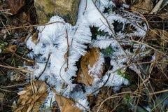 在森林地板上的树冰 免版税图库摄影