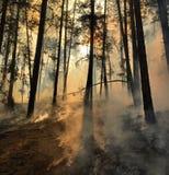 在森林地板上的烟 免版税库存图片