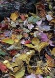 在森林地板上的秋天叶子 免版税库存图片