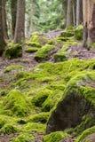 在森林地板上的绿色青苔 库存照片