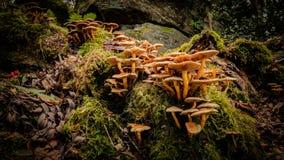 在森林地板上的蘑菇 免版税图库摄影