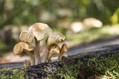 在森林地板上的蘑菇 库存照片