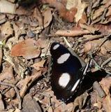 在森林地板上的蝴蝶 免版税库存图片