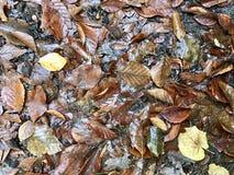 在森林地板上的Leeves秋天 免版税图库摄影