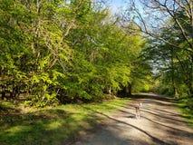 在森林地轨道的狗 免版税图库摄影