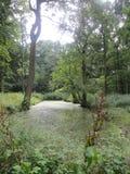 水在森林地 库存照片