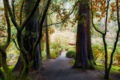 在森林外面在波特兰日本庭院俄勒冈里 免版税库存图片