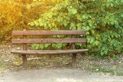在森林太阳的长木凳有绿色叶子背景 免版税库存照片