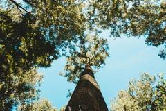 在森林射击的一棵高大的树木从低角度 库存照片