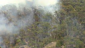 在森林射击的火焰 影视素材