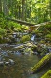在森林小河奥林匹克国家森林华盛顿州的瀑布 库存照片
