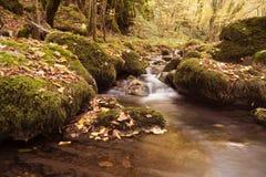 在森林山小河的秋天 美丽的秋天森林,用青苔盖的岩石 有急流和瀑布的山河 库存图片