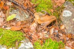 在森林山的蘑菇 免版税库存图片