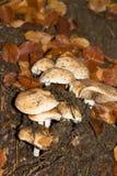 在森林山的蘑菇 免版税库存照片