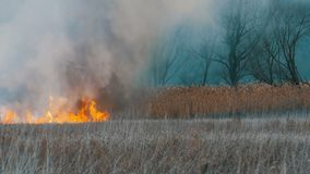 在森林干草原的可怕的大高野火 干燥干草原草在深刻的秋天烧 影视素材