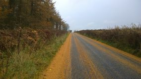 在森林旁边的秋天路 免版税库存照片