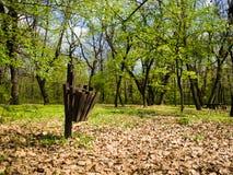 在森林旁边的美丽的容器 库存图片