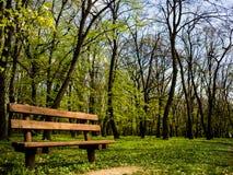 在森林旁边的美丽的长凳 库存图片