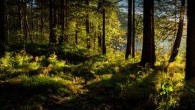 在森林时间间隔的美好的日落 太阳的明亮的光芒它森林 股票录像