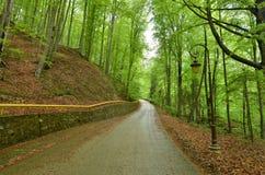 在森林春天季节的柏油路 免版税库存图片