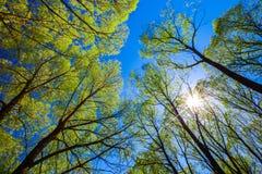 在森林查寻对蓝天 免版税图库摄影