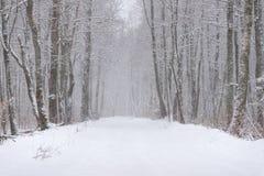 在森林横向射击雪结构树冬天之上 积雪的路在降雪期间的森林里 与积雪的森林和路阿门的冬天故事 库存图片