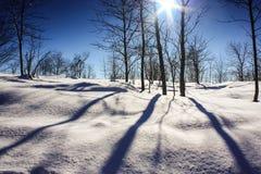 在森林横向射击雪结构树冬天之上