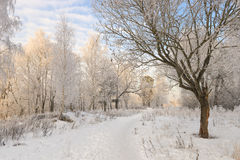 在森林横向射击雪结构树冬天之上 库存照片