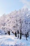 在森林横向射击雪结构树冬天之上 免版税库存照片
